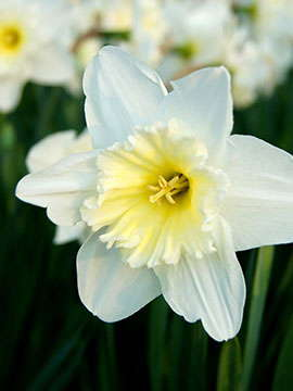 William Veit